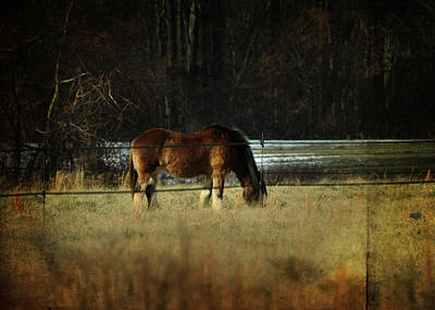 Horse Farm Maryland Photograph - In The Winter Pasture by Rebecca Sherman