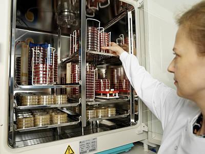 Incubating Bacteria Print by Tek Image