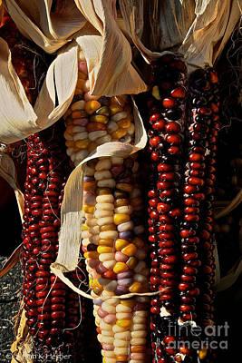 Indian Corn Print by Susan Herber