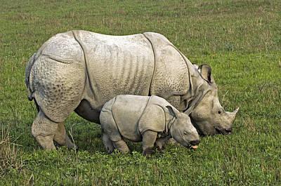 Indian Rhinoceroses Print by Tony Camacho