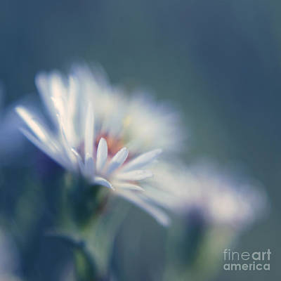 Square Flower Photograph - Innocence - 03 by Variance Collections
