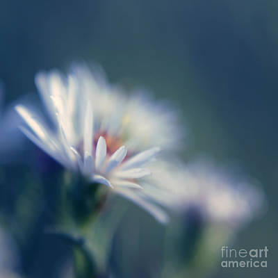 Square Flower Photograph - Innocence 03b by Variance Collections