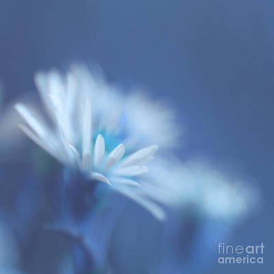Square Flower Photograph - Innocence 11 by Variance Collections