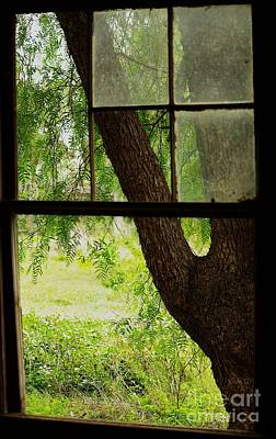 Melbourne Photograph - Inside Looking Out by Blair Stuart