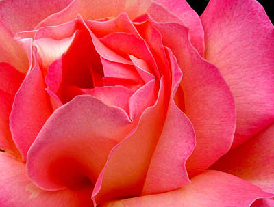 Flower Photograph - Inside My Heart by Rory Sagner