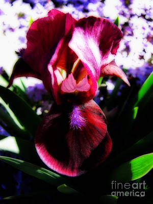 Iris Inner Beauty Print by Ms Judi