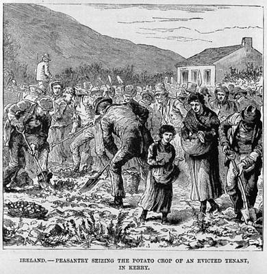 Irish Peasants Seizing The Potato Crop Print by Everett