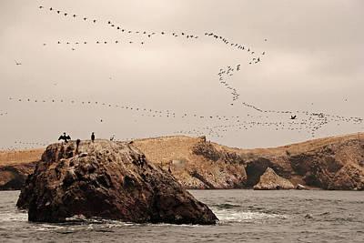 Of Birds Photograph - Islas Ballestas - Peru by Andrea Cavallini