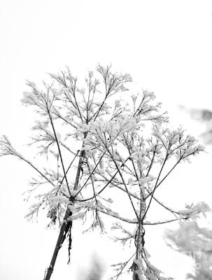 Contemporary Photograph - It Is Snowing There  2 by Tanya  Searcy
