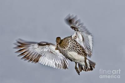 Duck Photograph - I've Got My Eye On You by John Buxton