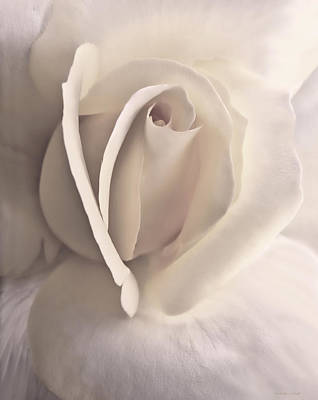 Ivory Rose Photograph - Ivory Splendor Rose Flower by Jennie Marie Schell
