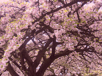 Japanese Blossom In Holland Print by Nop Briex