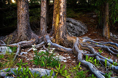 Trees Photograph - Jasper - Root Bound by Terry Elniski