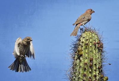 Finch Photograph - Jump by Saija  Lehtonen