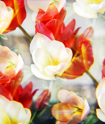 Tulips Photograph - Kaleidoscope Tulips 1 by Marilyn Hunt