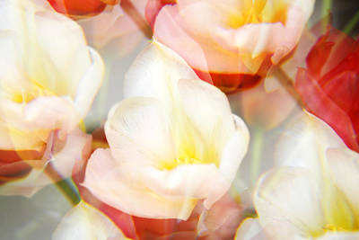 Tulips Photograph - Kaleidoscope Tulips 2 by Marilyn Hunt