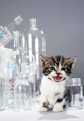 Kitten Amongst Recycled Bottles And Jars Print by Martin Poole