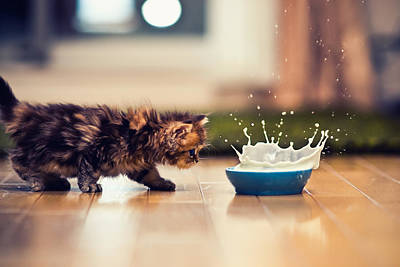 Kitten And Bowl Of Milk Print by Benjamin Torode