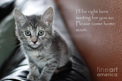 Hallmark Photograph - Kitten Greeting Card by Micah May