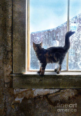 Kitten On Windowsill Of Abandoned House Print by Jill Battaglia