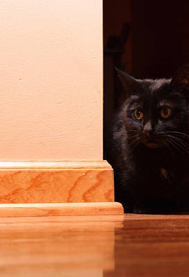 Black Cat Photograph - Kitty Corner by Peter Chilelli