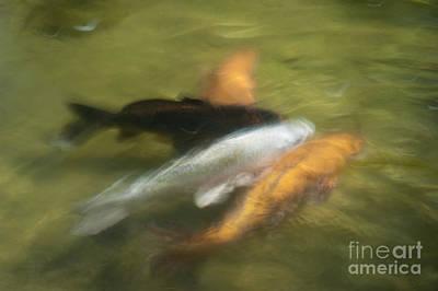 Koi Fish 05 Original by Catherine Lau