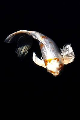 Koi From Above Print by Don Mann
