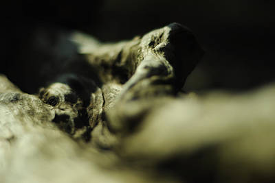 Cthulhu Photograph - Kraken by Rebecca Sherman