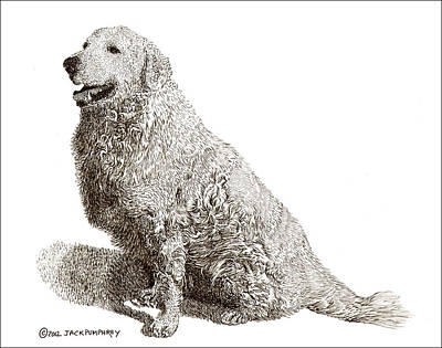 Working Breed Drawing - Kuvasz Named Pax by Jack Pumphrey