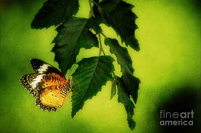 Lacewing Photograph - Lacewing Delight by Lois Bryan