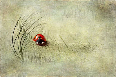 Lady Bird Print by Svetlana Sewell