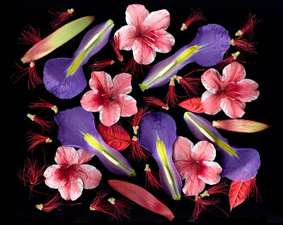 Floral Photograph - Lady Day by Tim Fleming