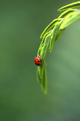 Ladybug 1 Print by Pan Orsatti
