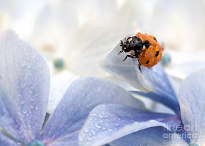 Florets Photograph - Ladybug by Nailia Schwarz