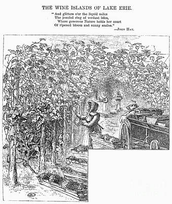 Lake Erie: Vineyard, 1873 Print by Granger