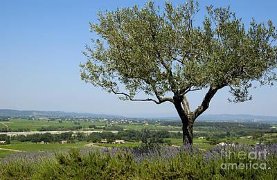 Olive Photograph - Landscape Of Provence. France by Bernard Jaubert