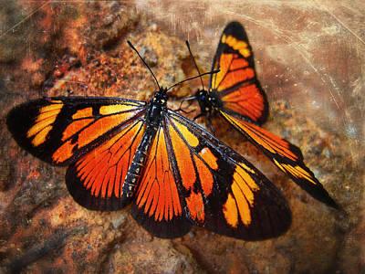 Skiphunt Photograph - Las Mariposas by Skip Hunt