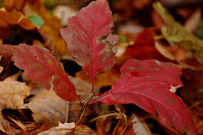 Colorful Photograph - Last Stand Of Red  by LeeAnn McLaneGoetz McLaneGoetzStudioLLCcom