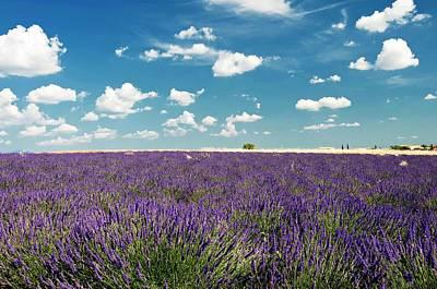 Lavender Field Print by Paul Biris
