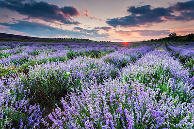 Lavender Sea Print by Evgeni Dinev