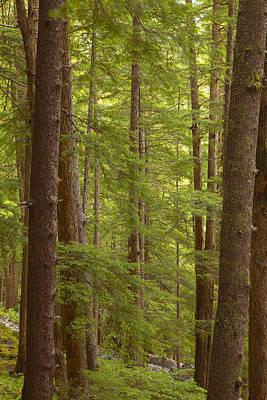 Prints Of Alaska Photograph - Layers Of Green by Tim Grams