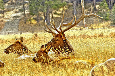 Moose Mixed Media Photograph - Lazy Days Of Fall by James Steele
