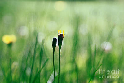 Impressionism Photograph - Le Centre De L Attention - Green S0101 by Variance Collections