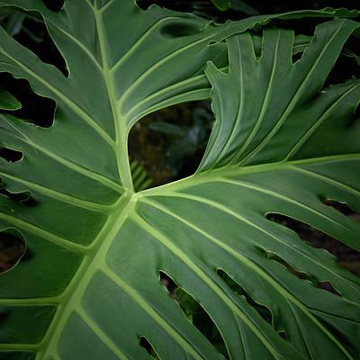 Leaf With Empty Space Print by David Coblitz