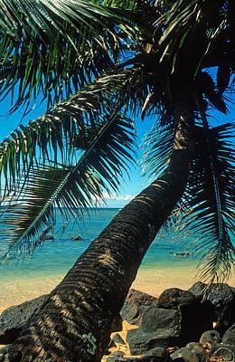 Leaning Palm On Anini Beach Print by Kathy Yates