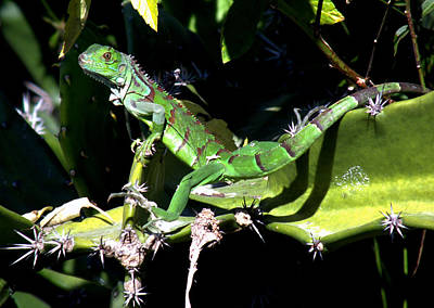 The Nature Center Photograph - Leapin Lizards by Karen Wiles