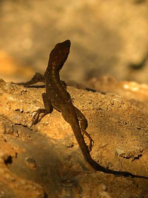 Newts Photograph - Leapin' Lizards by Trish Tritz