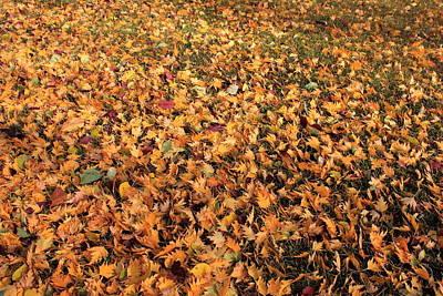 Leaves In Grass Print by Jim Sauchyn
