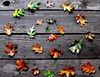 Autumn Photograph - Leaves by Skye Zambrana