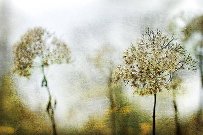Winter Flowers Photograph - Leavings by Rebecca Cozart